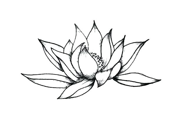 600x404 Pictures Of Lotus Flower Drawings