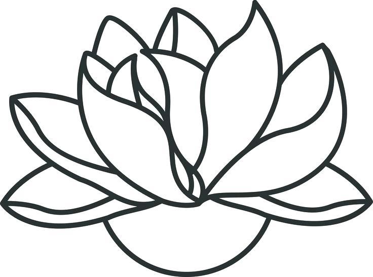 736x547 Simple Lotus Drawing