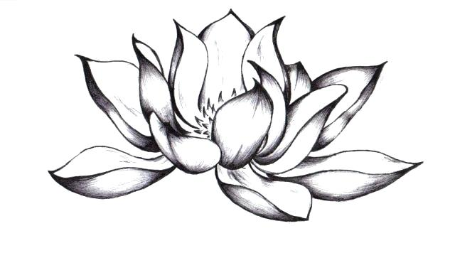 640x394 easy to draw lotus flower how to draw a lotus best lotus flower