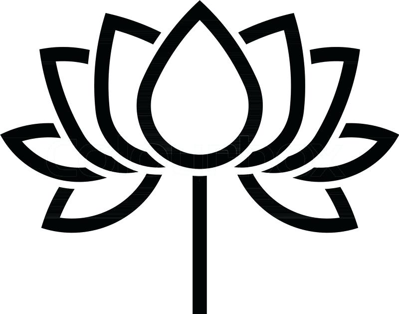 800x629 outline of a lotus flower lotus flower outline drawing of lotus