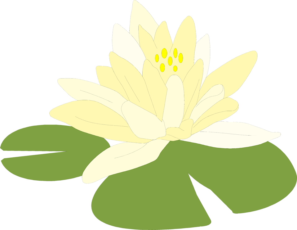 958x741 Lilypad Drawing Shapla Transparent Png Clipart Free Download