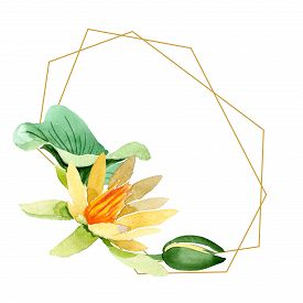 275x275 Lotus Flower Drawing Photos And Images