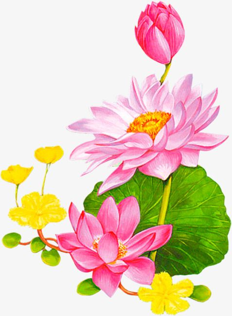 477x650 Lotus Lotus Leaf Cartoon Pattern Background Decoration, Lotus