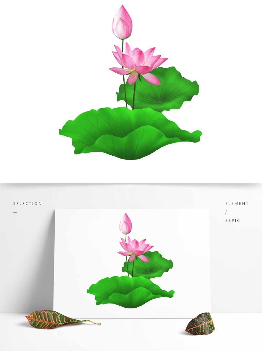 1024x1369 Lotus Leaf Png Images