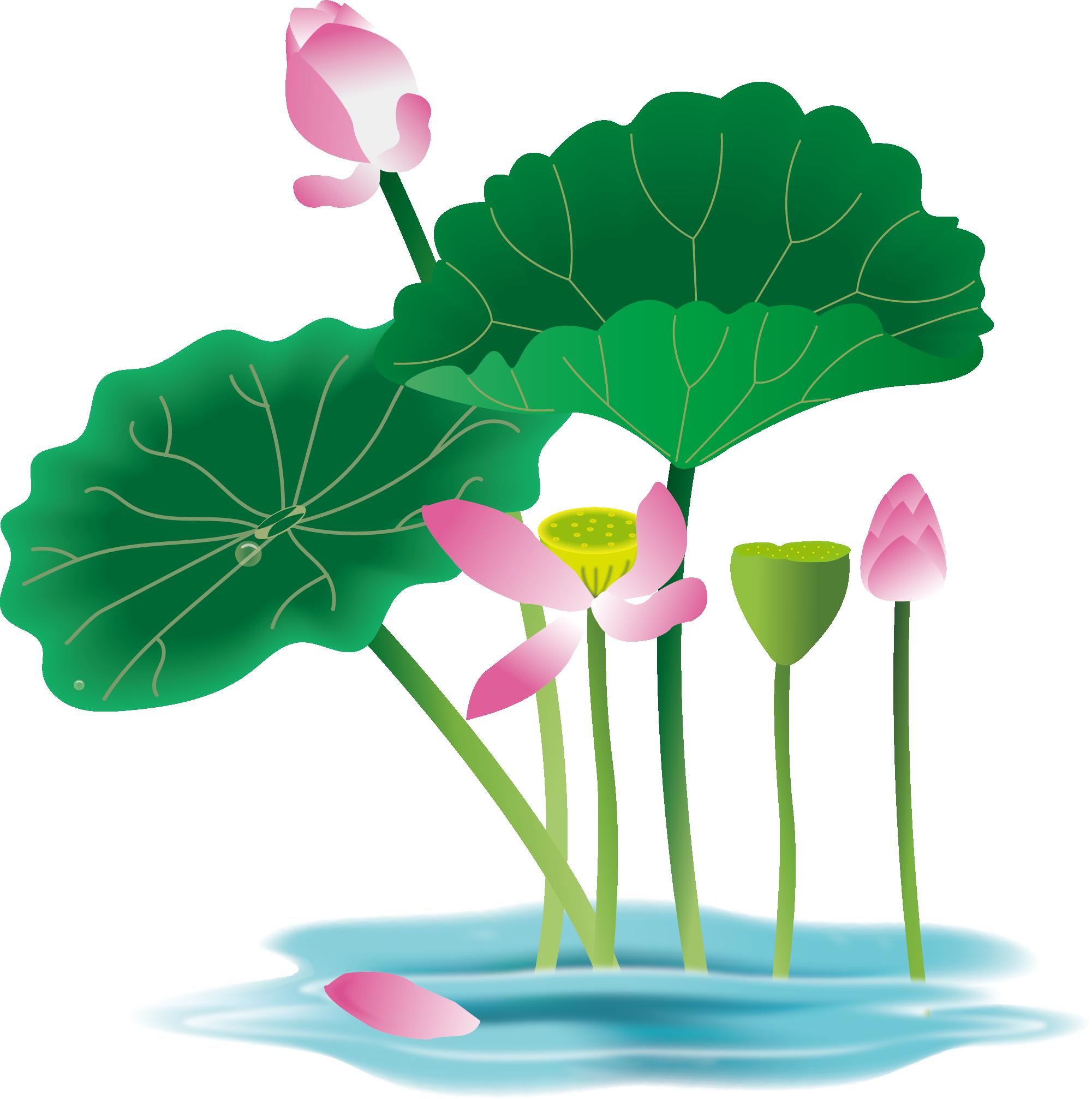 2001x2014 Lotus Leaf Png Images