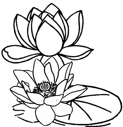 432x447 Five Delightful Lotus Coloring Pages For All Ages