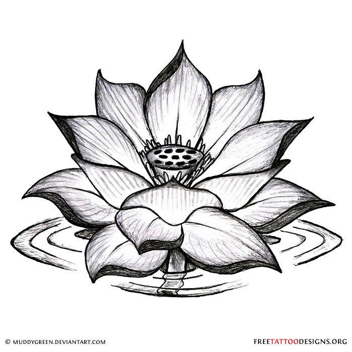 700x700 Eraser Drawing Lotus Flower For Free Download