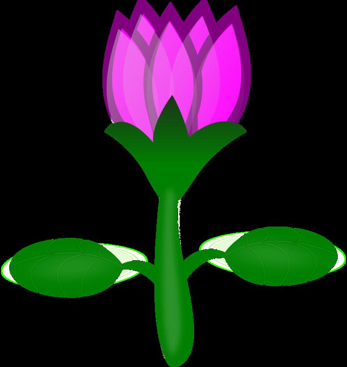 708x750 Sacred Lotus Pink Flowers Drawing Cartoon Cc0