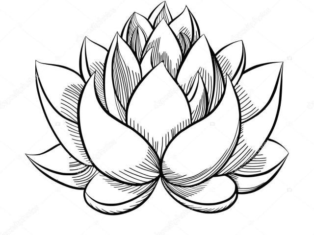640x480 Simple Drawing Of Lotus Flower Lotus Drawing Bud For Free
