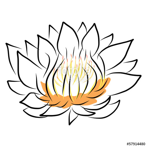 500x500 Hand Drawing Water Lily, Lotus, Flower Stock Image And Royalty