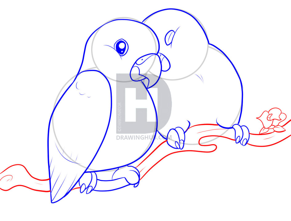 945x720 How To Draw Lovebirds, Step
