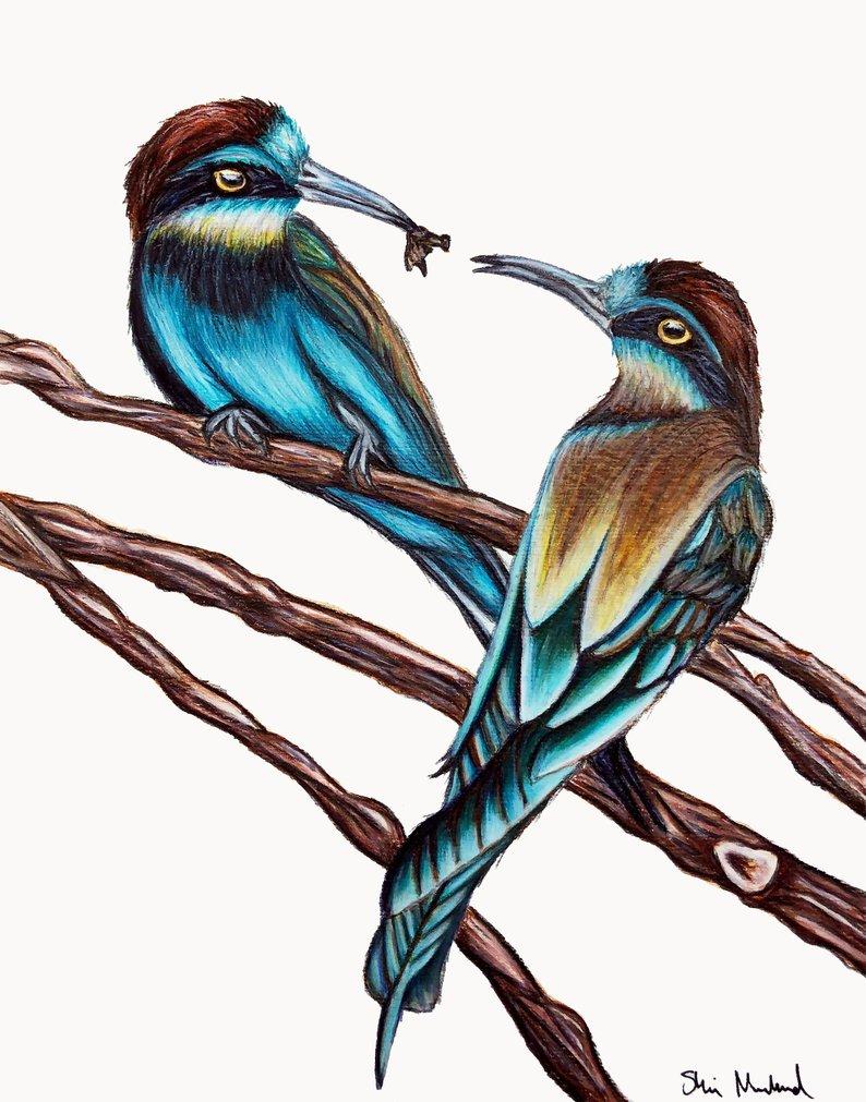 794x1011 Love Birds Drawing Painting Fine Art Print Etsy