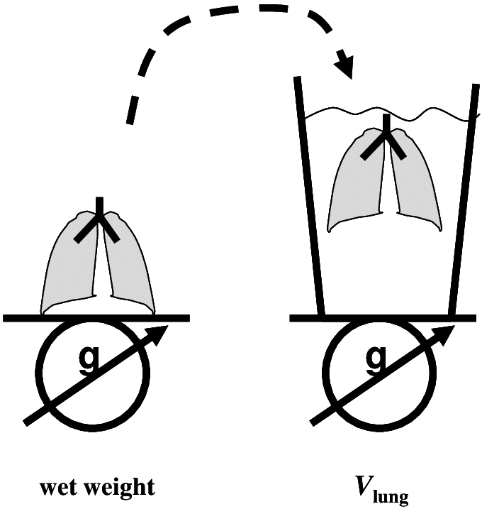 680x717 Determination Of The Wet Weight And The V Lung Of The Lungs