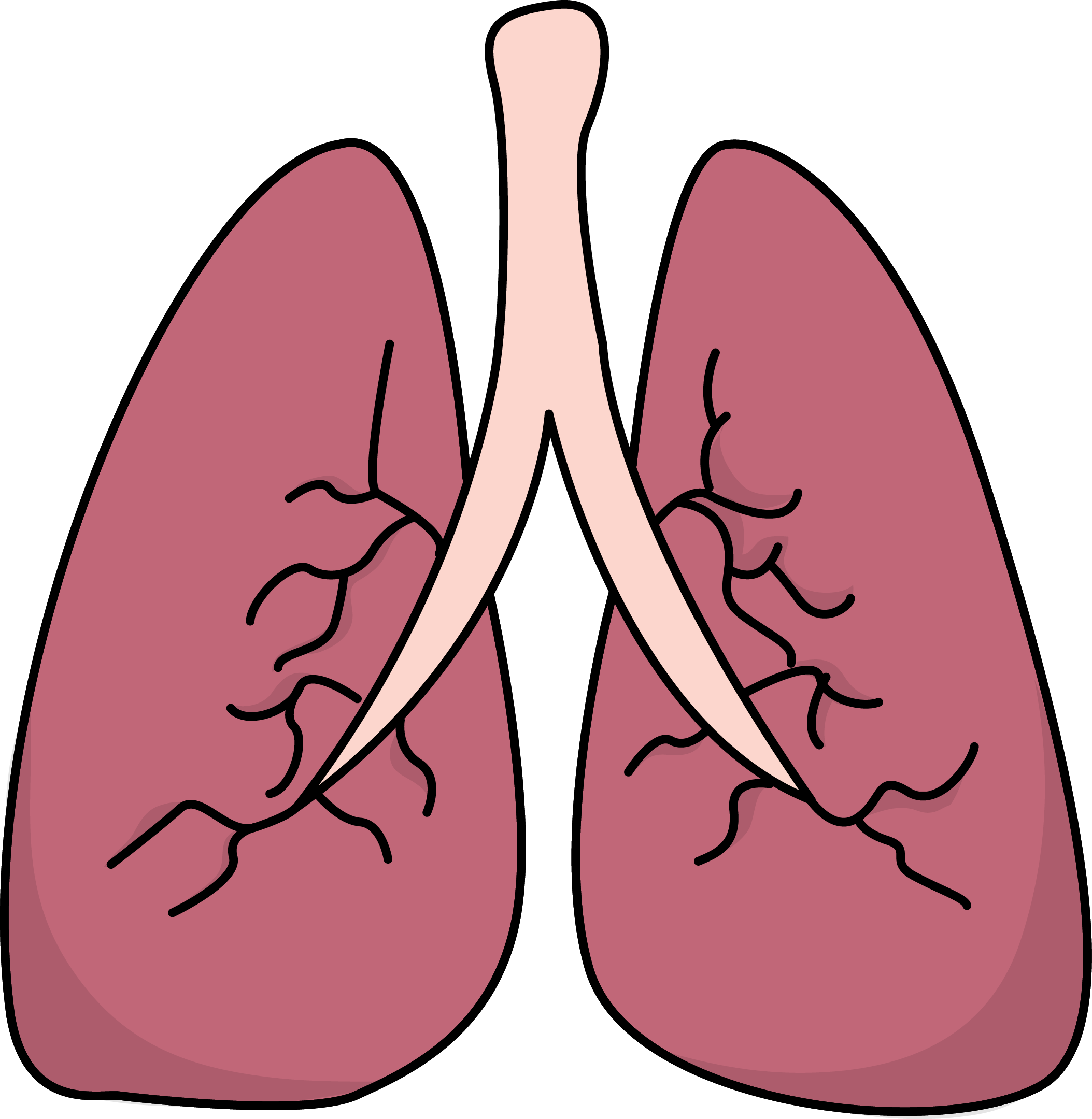 2107x2160 Drawing Lungs Transparent Background Frames Illustrations Hd
