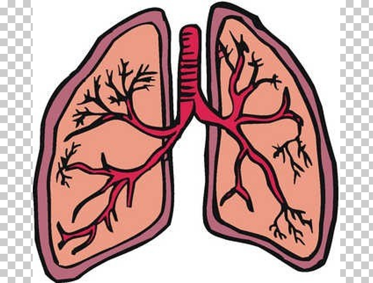 728x552 Lung Cancer Organ Small Lungs S Png Clipart Free Cliparts Uihere