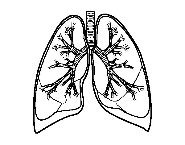600x470 Lungs Coloring