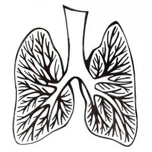 300x300 Paper Jane Studio Drawing Lungs For A Special Client Project