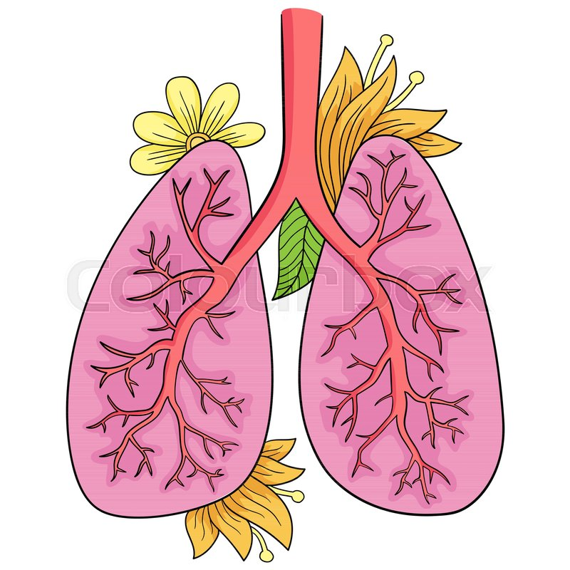 800x800 Vector Illustration Of Lungs Doodle Stock Vector Colourbox