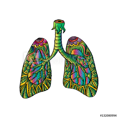500x500 Illustration Of Lungs Doodle Drawing Of Human Organ