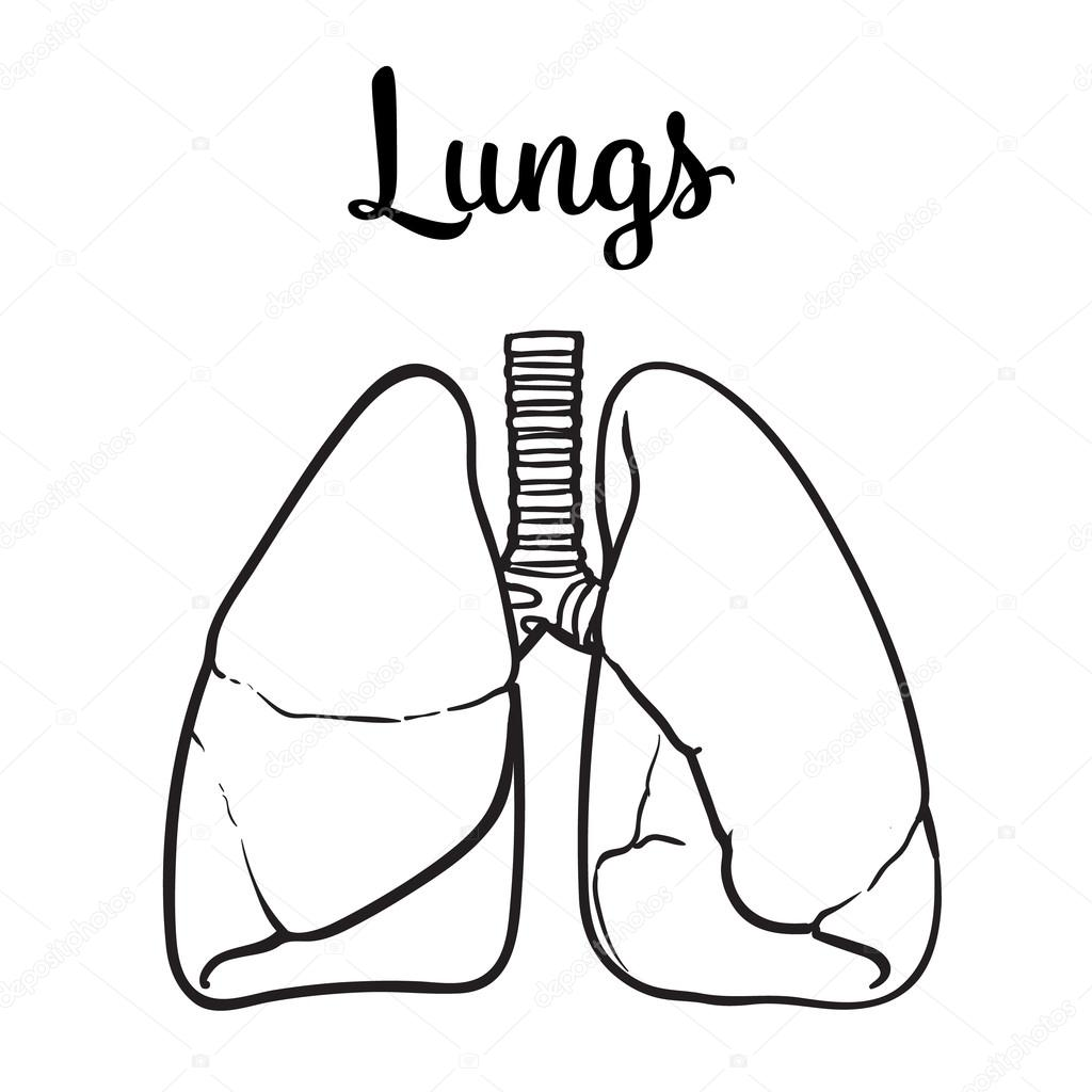 1024x1024 Lungs Drawing Butterfly For Free Download