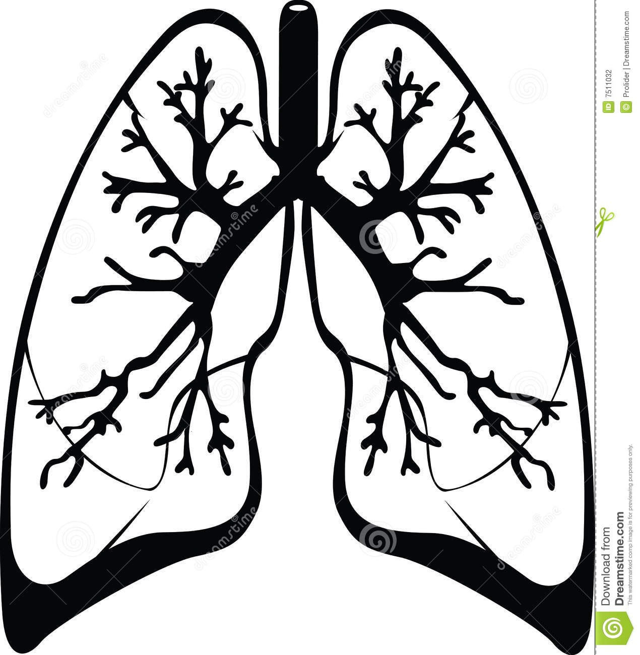 1270x1300 Lungs Drawing Black And White For Free Download