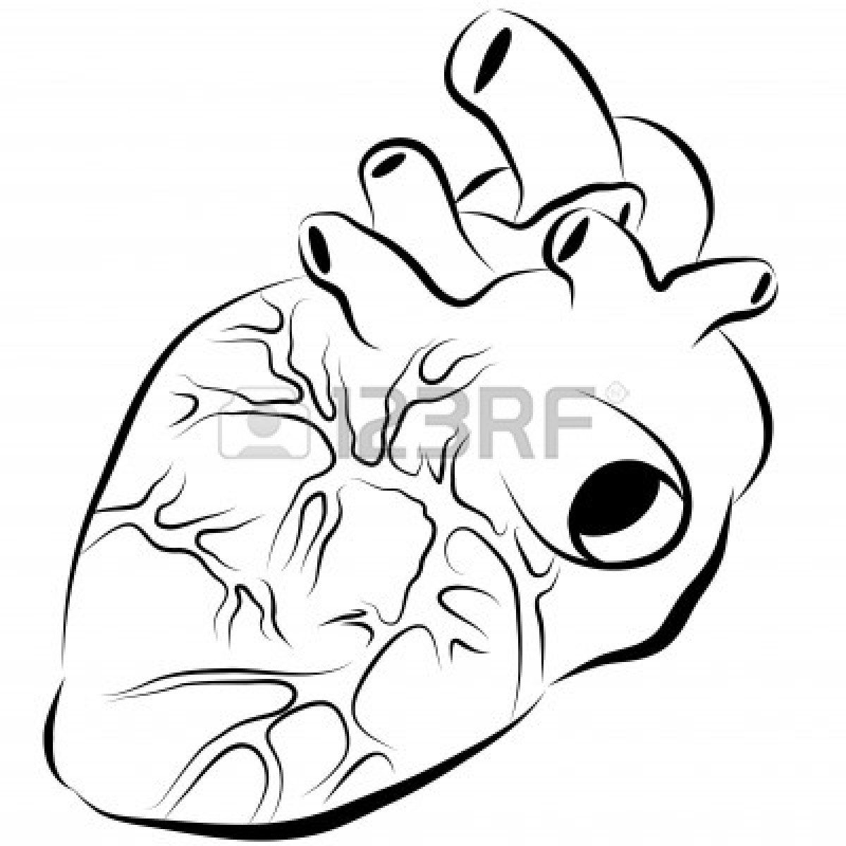 1200x1200 an image of a human heart ink paintings human heart drawing
