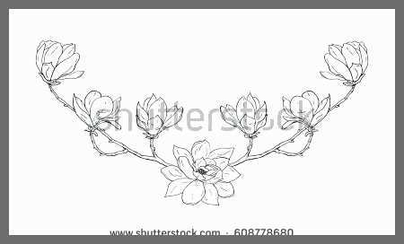 Magnolia Flower Drawing Free Download Best Magnolia Flower Drawing