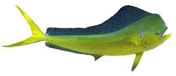 360x156 dolphin fishing miami and miami beach
