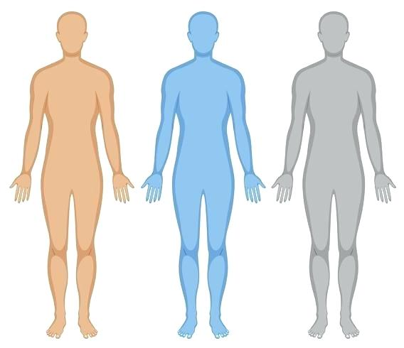 568x490 human outline human palm outline human body outline png
