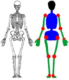 Male Body Proportions Drawing