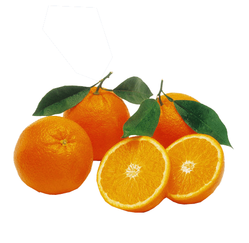 493x480 Collection Of Free Orange Drawing Background Download On Ui Ex