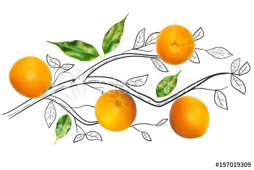 500x334 Fruit Composition With Fresh Orange And Cartoon Cute Doodle