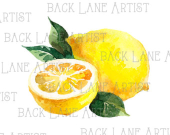 340x270 Fruits Blood Orange Citrus Watercolor Drawing Clipart Lineart Etsy