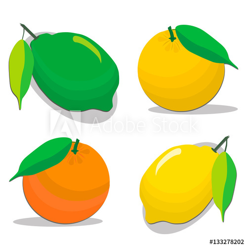 500x500 Abstract Vector Illustration Logo For Set Whole Ripe Citrus Fruit