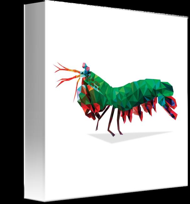 606x650 Geometric Abstract Peacock Mantis Shrimp