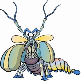 268x269 Invertebrate Diversity Mantis Shrimp