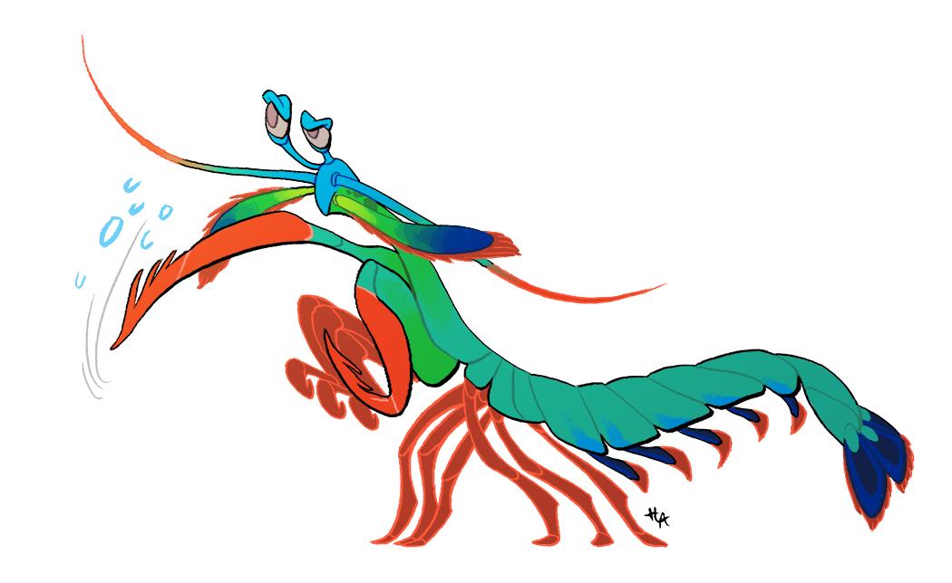 1050x644 Mantis Shrimp