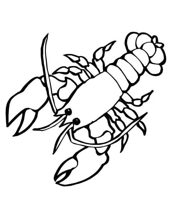 600x776 Mantis Shrimp Multi Colored