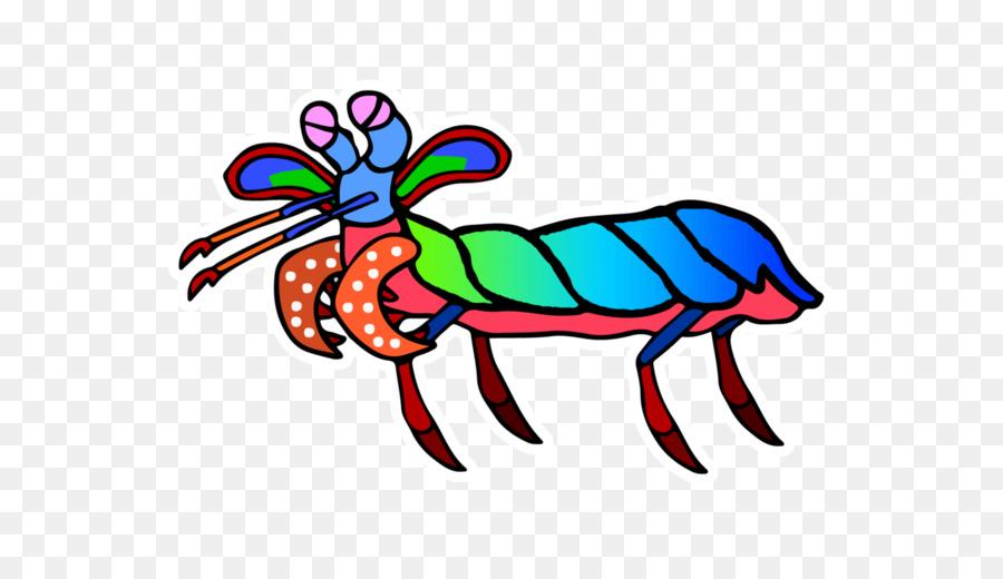 900x520 Clip Art Odontodactylus Scyllarus Caridean Shrimp Mantis Shrimp