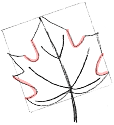 400x437 How To Draw Maple Leaves