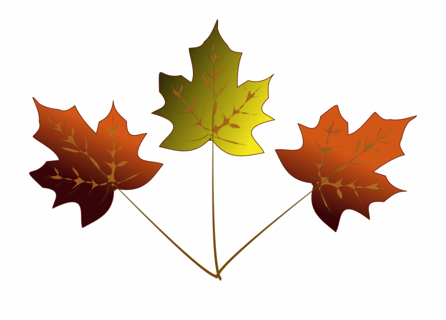 920x661 Maple Leaf Drawing