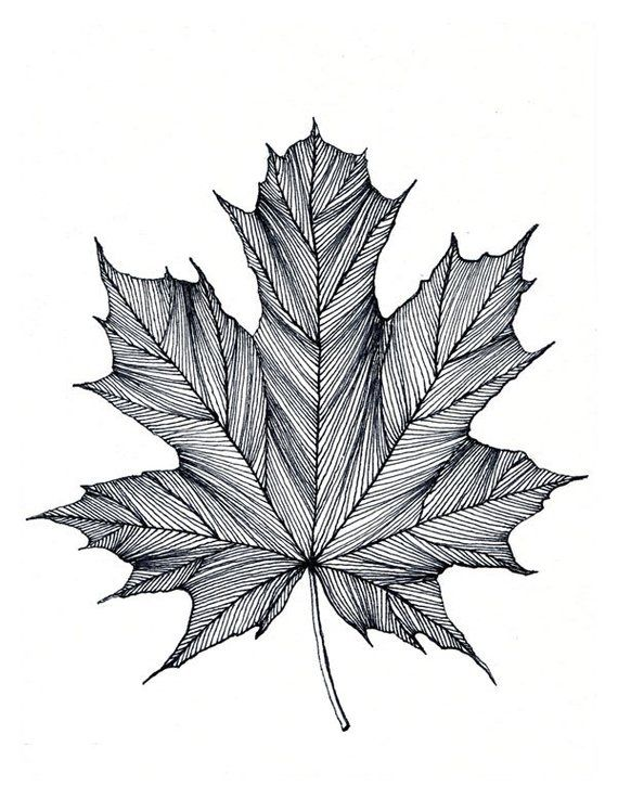 570x737 Maple Leaf Print Of Original Black Or Green Pen And Ink Drawing