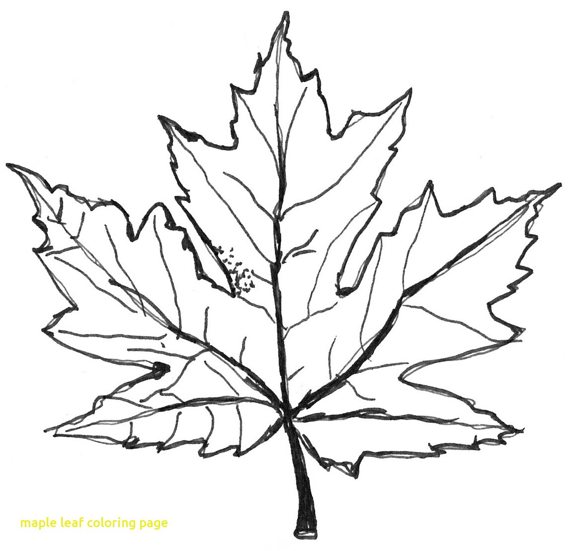 1157x1108 Maple Syrup Coloring Pages Beautiful Maple Leaf Coloring
