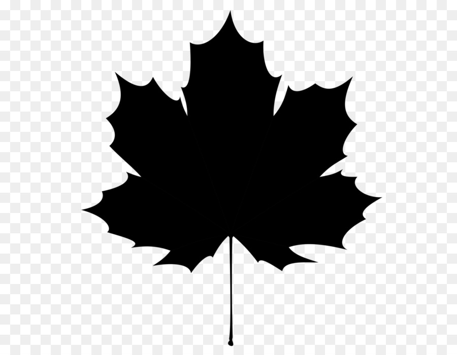 900x700 Maple Leaf Canucks Wildlife Services Illustration Vector Graphics