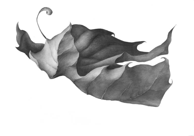 770x540 Maple Leaf Drawing