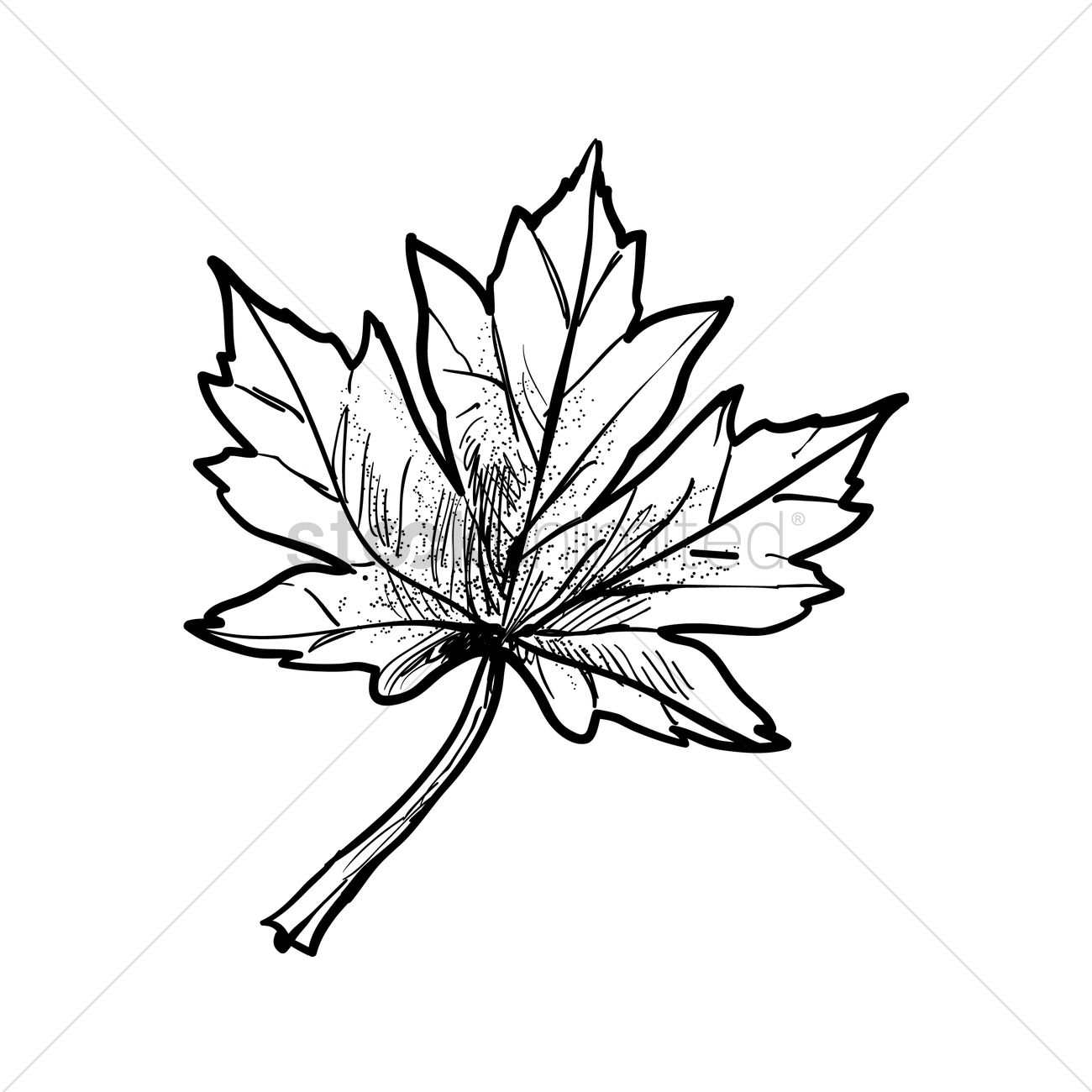 1300x1300 Maple Leaf Vector Image