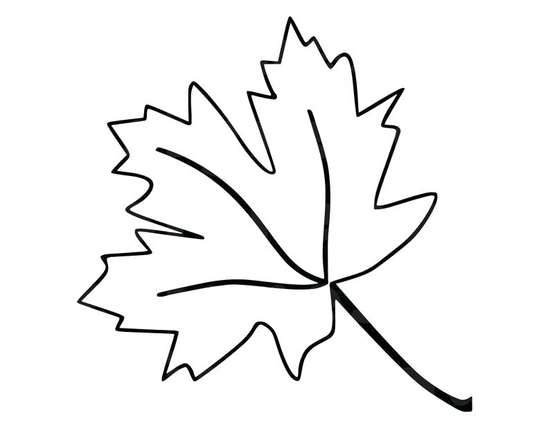 794x635 Outline Of A Maple Leaf Maple Leaf Drawing Gallery Outline Maple