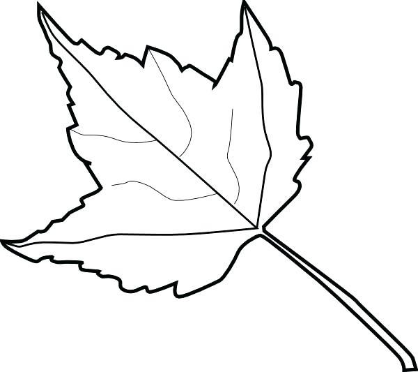 600x533 Leaf Outline Images Maple Leaf Template Leaf Outline