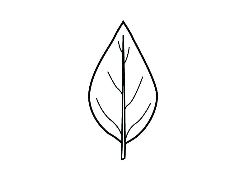 graphic regarding Printable Leaf Stencil named Maple Leaf Drawing Template Cost-free obtain perfect Maple Leaf