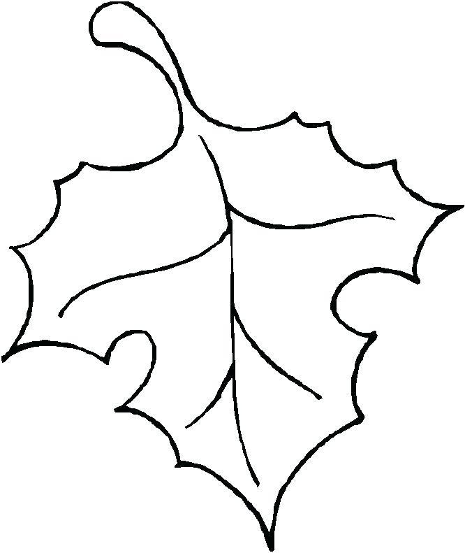 666x791 Leaves Outline Maple Leaf Template Leaf Outline Leaves Outline